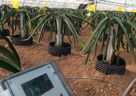 智能温室种植案例